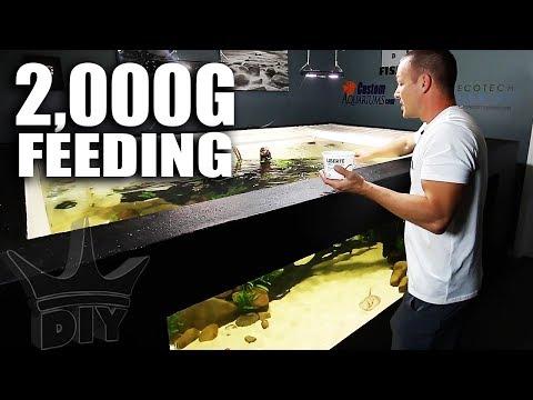 FEEDING THE 2,000G AQUARIUM + Aquarium gallery update