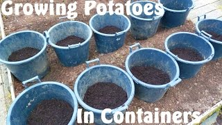 Allotment Diary : How to Grow Potatoes in Containers