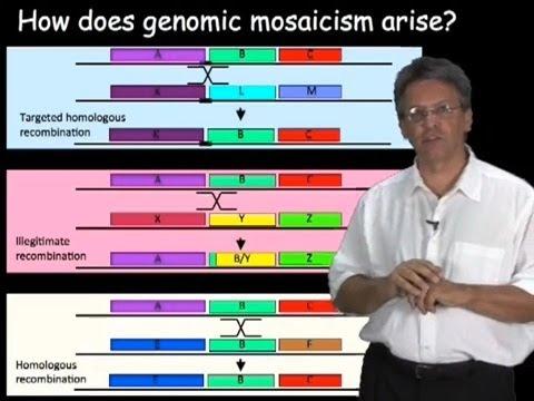 Makro és mikroparaziták