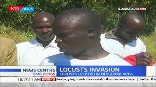 Swarms of locusts invade Kisumu County