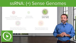 Positive-sense Single-stranded RNA ((+)ssRNA) Virus – RNA Virus Genomes – COVID-19 | Lecturio