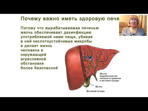 Билирубин в норме гепатит с