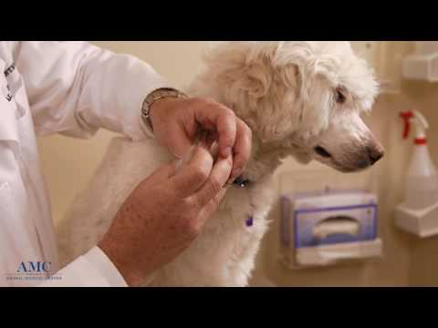 Video Lyme Disease in Humans & Dogs