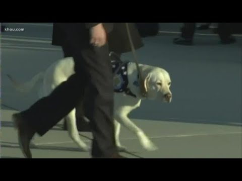 What's next for President George H.W. Bush's service dog Sully?