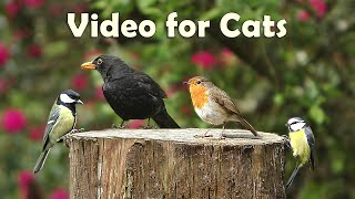 Videos for Cats : Beautiful Morning Birdsong