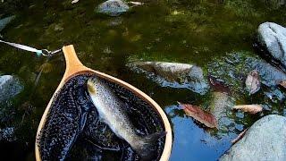 養沢毛鉤専用釣場でフライフィッシング 2016年7月1日