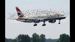 Top damage by birds crashing into planes | Airplane crashes into big fat bird
