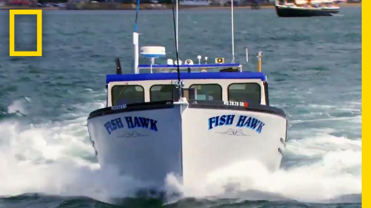Enter the Fish Hawk | Wicked Tuna thumbnail