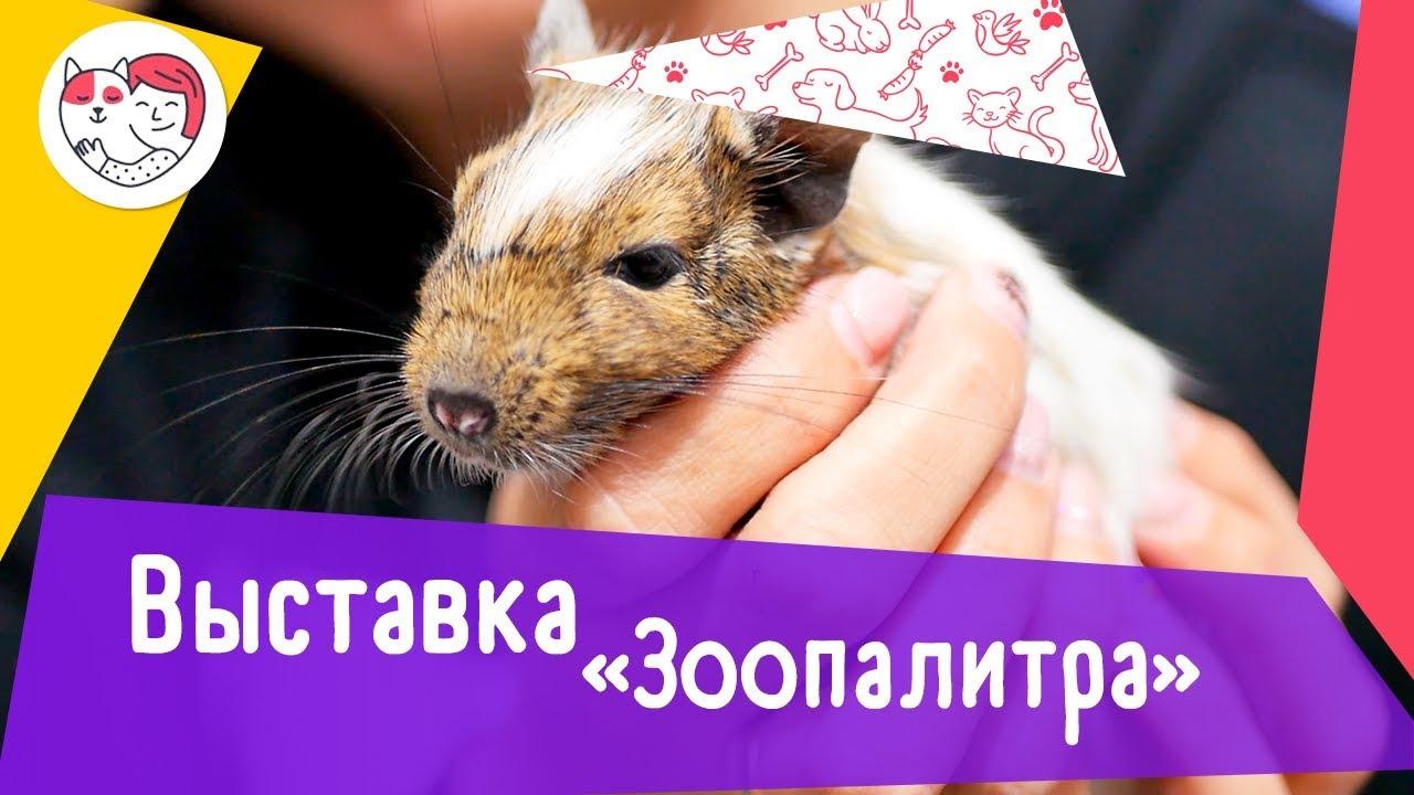 Выставка домашних животных «Зоопалитра»