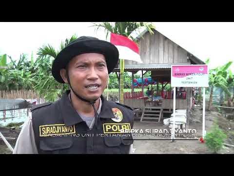 Sentuhan Binmas Noken Polri Untuk Pertanian Papua