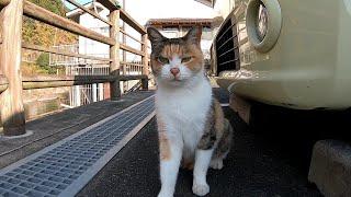 道の駅で出会った三毛猫が人懐っこ過ぎる