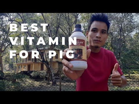 , title : 'Best vitamin for pig#pig farm in assam#assam pig farm#pig farm in india