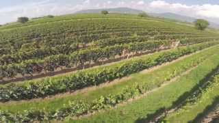 preview picture of video 'Weinberge Nussdorf GoPro Hero3'