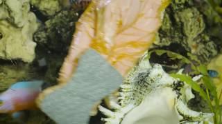 Werbespot Rakso Aquariumreiniger