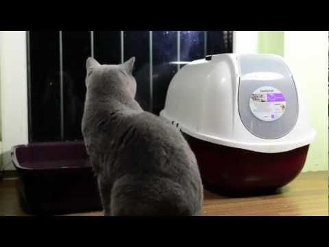 Thema: offene Katzentoilette vs geschlossene Katzentoilette (Teil 2/3) - der Test