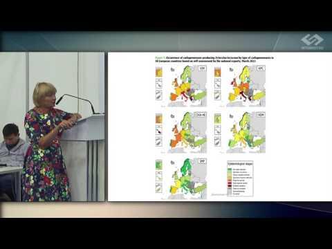 Морфология и структура лямблий