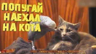 Попугай разбирается с котом ,угар с животными!😁 ЛУЧШИЕ ПРИКОЛЫ | РОЗЫГРЫШИ | ШУТКИ | Смешное видео!