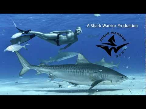 Freediving With Sharks (2013)