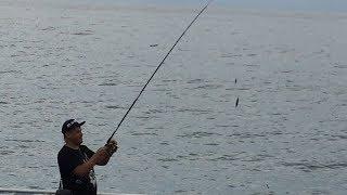 Удилище для ловли ставриды с берега