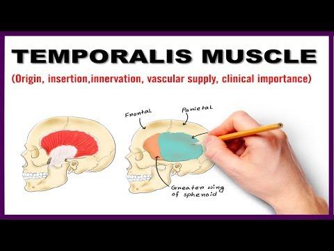 La gymnastique pour les muscles de la petite bassine