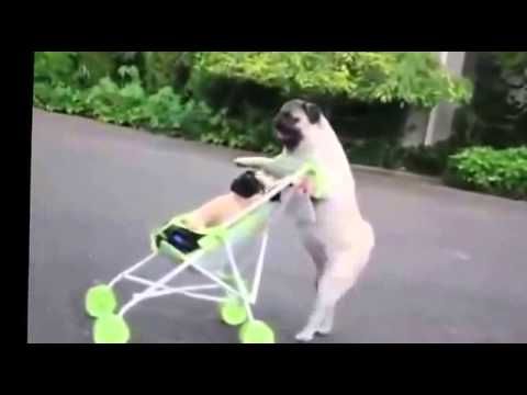 amazing dog talking her baby outing for air