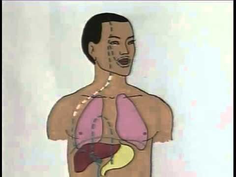 Краткая характеристика гепатитов