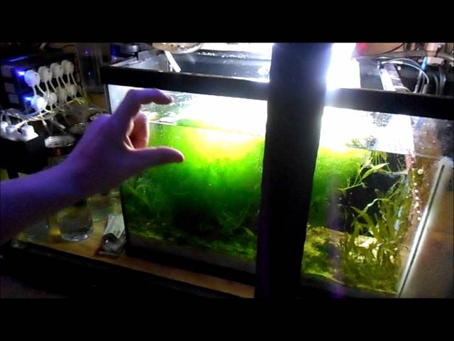 All About My Refugium (Viewer Question) | Reef Tank