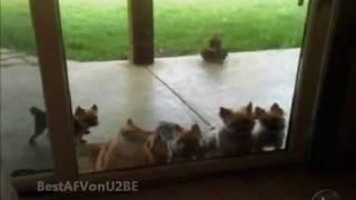 ☺ America's Funniest Home Videos Part 121 | OrangeCabinet
