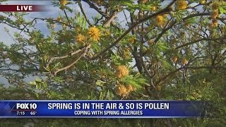 Pollen in love with you? Coping with spring allergies in Arizona