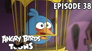 Angry Birds Toons | A Pig's Best Friend   S1 Ep38