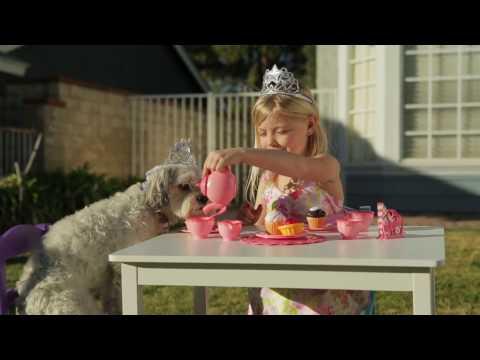 Follow Your Dreams - Animal Behavior College - YouTube