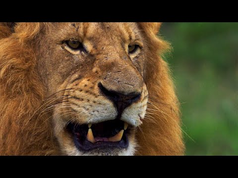 Deadliest Predators | Wild Lands: South Africa | BBC Earth