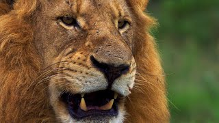 Wild Lands: South Africa with Hannah Stitfall | BBC Earth