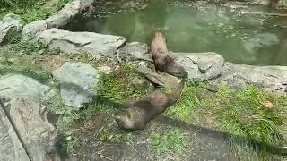 Zoo to You: Anotter great edition