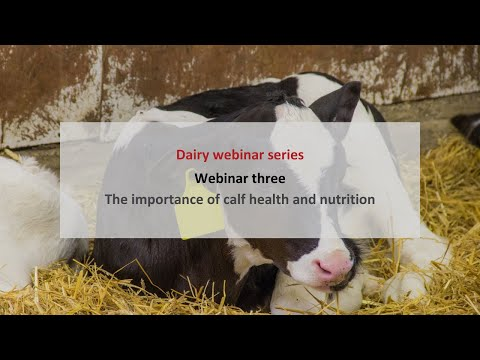 , title : 'Future of dairy farming: the importance of calf health and nutrition