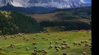 J. S. Bach: Cantata Nº 208, 'Sheep May Safely Graze', BWV 208