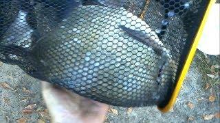 Журиничи рыбалка брянская область