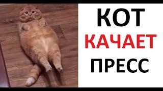 Лютые приколы. Кот качает ПРЕСС! ХОЧУ КУБИКИИиии МЯВК !!!