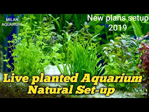 Live planted Fish Tank | Live Plant Aquarium set-up & Decoration ideas 2019