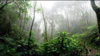 """Apelo da CNBB: """"Levante a voz pela Amazônia"""""""