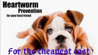 What the vet won't tell you. How to treat heartworms cheap and prevent heartworms.