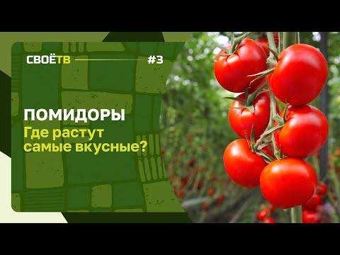 Где растут самые вкусные помидоры / Зачем нужна лактоза / Своё с Андреем Даниленко / Выпуск #3