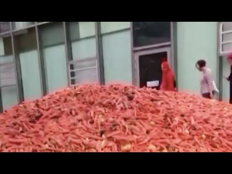 'Grounding' | Tons of carrots dumped outside London university