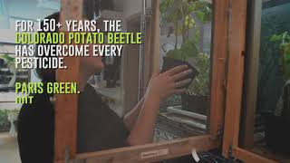 Newswise:Video Embedded discovery-how-colorado-potato-beetles-beat-pesticides