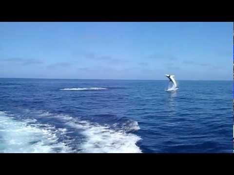 Uno squalo abbocca all'amo