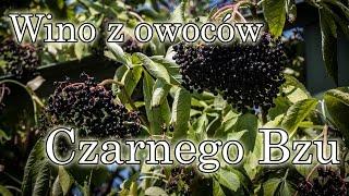 Przepis na zdrowe winko z owoców czarnego bzu