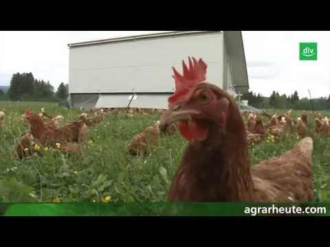 Hühnerstall auf vier Rädern
