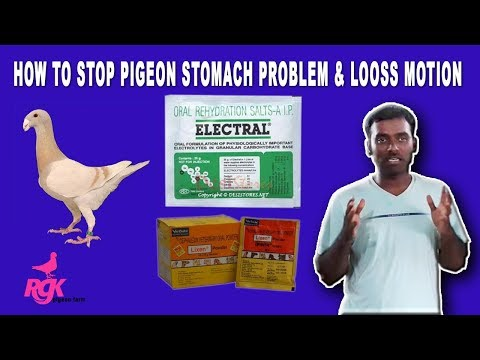 , title : 'HOW TO STOP PIGEON STOMACH PROBLEM & LOOSS MOTION