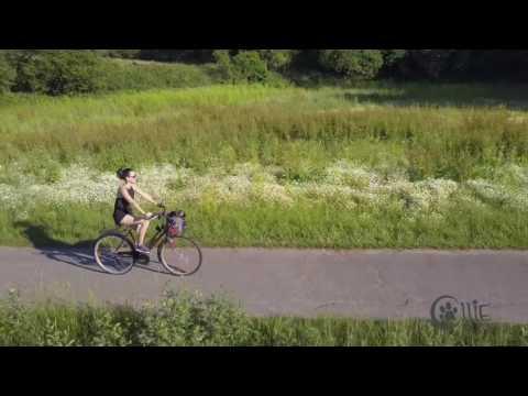 Hunde Fahrradkorb tierisch