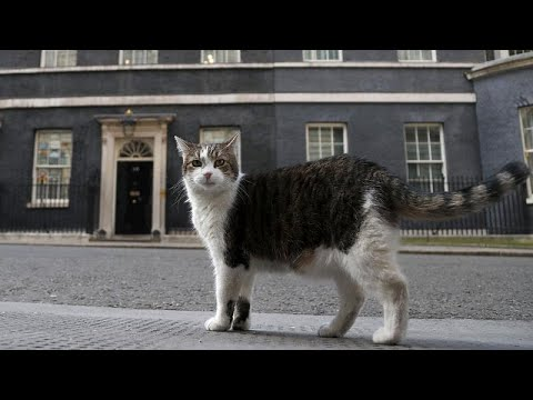 International Cat Day: Larry poses for photo shoot in Downing Street